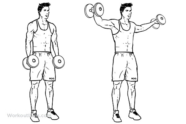 The Dumbbell Lateral Raise