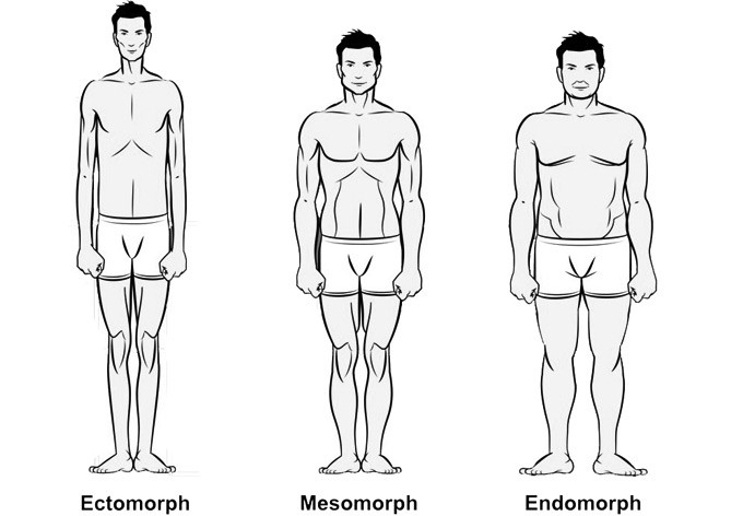 the 3 body types