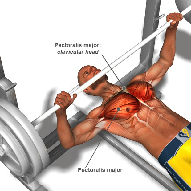 working out chest muscles